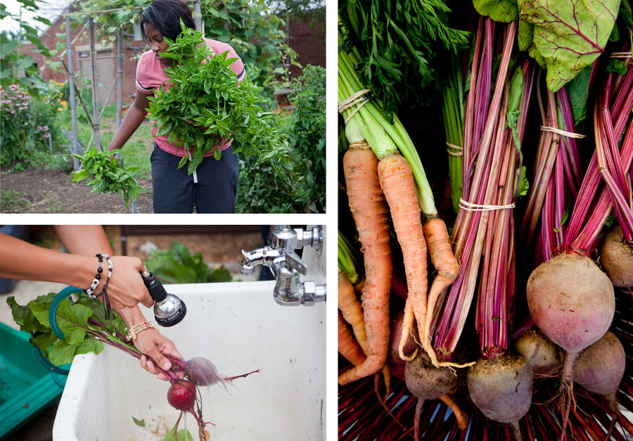 Top Left: Nychele Williams, 15, gathers basil in the garden at Eastern Senior High School. Bottom left: Yanci Flores rinses recently harvested beets. Right: Carrots and beets are displayed at the Aya farmers market, where students sell their produce on Saturdays. Lydia Thompson/NPR