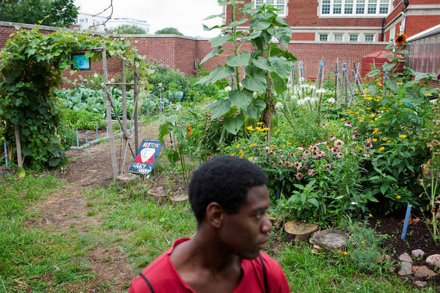 Tall brick walls conceal a colorful garden at Eastern Senior High School in Washington, D.C., where students like Romario Bramwell, 17, harvest flowers and produce. The program is run by City Blossoms, a nonprofit that brings gardens to urban areas. Lydia Thompson/NPR