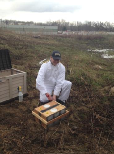 Taher beekeeping