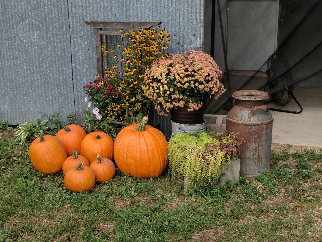 Harvest farm scape